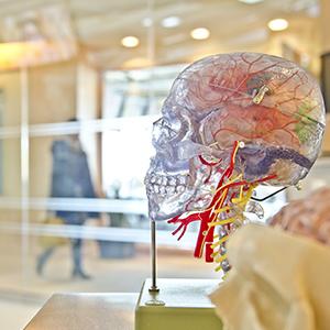 centro-neurologico-en-mallorca